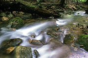 Rushing Stream Acrylic Prints - Cranberry Wilderness Acrylic Print by Thomas R Fletcher
