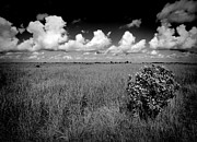 Deep Reflection Posters - Everglades Landscape Poster by Rudy Umans
