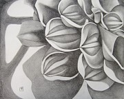 Photo-realism Drawings Originals - Flower by Michael Flynt