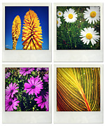 Flower Photo Framed Prints - Flowers Framed Print by Les Cunliffe