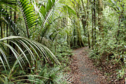 Jungle Framed Prints - Forest trail Framed Print by Les Cunliffe