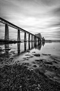 Seaweed Photos - Forth Rail Bridge by John Farnan
