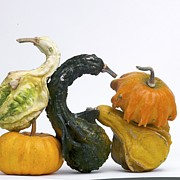 Food And Drink Metal Prints - Gourds and pumpkins Metal Print by Bernard Jaubert
