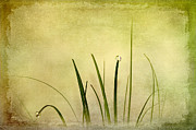Acrylic Art Digital Art Posters - Grass Poster by Svetlana Sewell