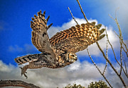 Elaine Malott - Great Horned Owl