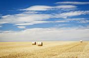 Tim Hester - Harvest