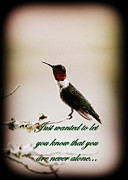 Sympathy Card Posters - Hummingbird - Card Poster by Travis Truelove