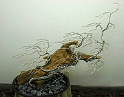Wire Tree Sculpture Prints - #4 Hurricane  Print by Ricks  Tree Art