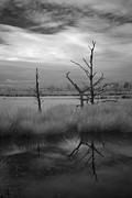 Alienating Photo Posters - Infrared picture of nature areas in the Netherlands Dwingelderveld Poster by Ronald Jansen