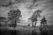 Peat Lake Posters - Infrared picture of the nature area Dwingelderveld in Netherlands Poster by Ronald Jansen