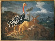 Ostrich Photos - Italy, Lombardy, Milan, Archbishopric by Everett