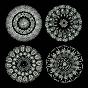 Monotone Acrylic Prints - Kaleidoscope Ernst Haeckl Sea Life Series Black and White Set On Acrylic Print by Amy Cicconi