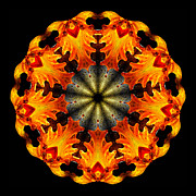 Flame Prints - Kaleidoscope of Blown Glass Print by Amy Cicconi