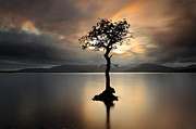 Tree Reflection At Sunset Prints - Loch Lomond Sunset Print by Grant Glendinning