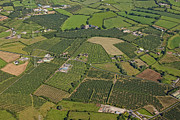 Agronomy Prints - Loughgall Orchards, Armagh Print by Colin Bailie