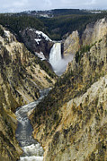Yellowstone National Park Photos - Lower Falls from Artist Point Yellowstone National Park by Shawn OBrien