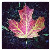 Maple Leaf Digital Art - Maple Leaf by Natasha Marco