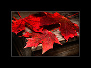 Aging Originals - Maple Leafs by Tommy Hammarsten