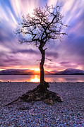 Colour Photo Framed Prints - Millarochy Bay Tree Loch Lomond Framed Print by John Farnan