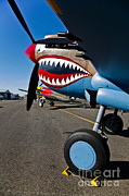 Vintage Nose Art Posters - Nose Art On A Curtiss P-40e Warhawk Poster by Scott Germain