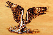 Fish Pyrography - Osprey by Ron Haist
