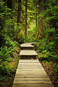 Vancouver Photo Prints - Path in temperate rainforest Print by Elena Elisseeva