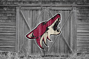Puck Framed Prints - Phoenix Coyotes Framed Print by Joe Hamilton