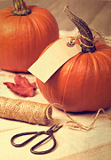 Gourds Prints - Pumpkins Print by Christopher and Amanda Elwell