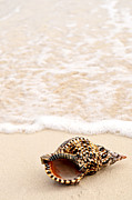 Seashell Posters - Seashell and ocean wave Poster by Elena Elisseeva