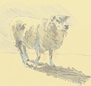Mike Jory - Sheep Sketch