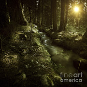 Small Stream In A Forest At Sunset Print by Evgeny Kuklev
