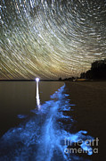Lagoon Prints - Star Trails And Bioluminescence Print by Philip Hart