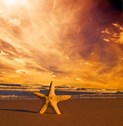 Warm Summer Prints - Starfish on the beach at sunset Print by Michal Bednarek