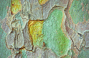 Colourful Bark Prints - Tree bark Print by Tom Gowanlock