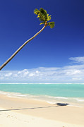 Empty Photo Posters - Tropical beach Poster by Elena Elisseeva