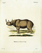 Rhinoceros Posters - Unknown, Color Lithographs With African Poster by Everett