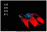 Virtues Posters - 4 Virtues Siamese Fighting Fish #3 Poster by Richard De Wolfe