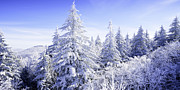 Cold Weather Prints - Winter along the Highland Scenic Highway Print by Thomas R Fletcher