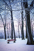 Park Bench Framed Prints - Winter park Framed Print by Elena Elisseeva