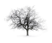 Wintery Photo Posters - Winter tree in fog Poster by Elena Elisseeva