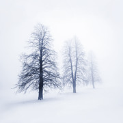 Tall Trees Framed Prints - Winter trees in fog Framed Print by Elena Elisseeva