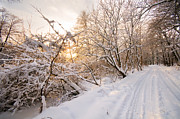 White River Scene Prints - Winter white forest Print by Michal Bednarek
