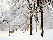 Winter Snow Landscape Posters - Winters Breath Poster by Jessica Jenney
