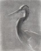 Grey Heron Prints - RCNpaintings.com Print by Chris N Rohrbach