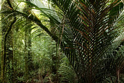 Botanical Photos - Jungle by Les Cunliffe
