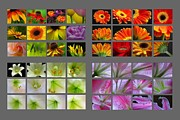 Flower Artwork Prints - 48 Beautiful and Inspiring Flower Photographs Print by Juergen Roth