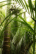 Jungle Photos - Jungle by Les Cunliffe