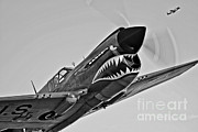 Vintage Nose Art Posters - A Curtiss P-40e Warhawk In Flight Poster by Scott Germain