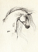 Zeichnung Prints - Arabian horse drawing Print by Angel  Tarantella