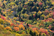 Thomas R Fletcher - Autumn Highland Scenic...